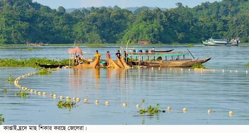 কাপ্তাই হ্রদে মাছ উৎপাদনে রেকর্ড :সরকারের কোষাগারে রাজস্ব জমা পড়েছে ১০ কোটি ৫৪ লক্ষ টাকা