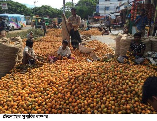টেকনাফের সুপারী রপ্তানী হচ্ছে মধ্য প্রাচ্যে সুপারির বাম্পার ফলনেও হাসি নেই বাগান মালিকের