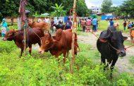 বান্দরবানে কোরবানির পশুর হাটে মানা হচ্ছে না স্বাস্থ্যবিধি, বাড়ছে করোনা সংক্রমণের ঝুঁকি